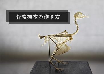 骨格標本の作り方